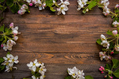 Blossoming apple tree on a wooden background, Black  template Royalty Free Stock Photo