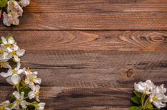 Blossoming apple tree on a wooden background, Black  template Royalty Free Stock Photography