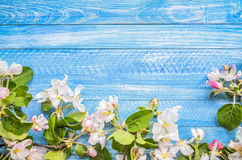 Blossoming apple tree on a wooden background, Blue blank templat Stock Photo