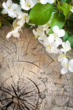 Blossoming apple tree on wooden background Stock Image