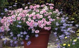 Blossoming balcony plants stock photos