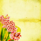 Blossoming Bergenia flowers against green grunge background Royalty Free Stock Images