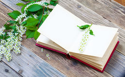 Blossoming bird-cherry and vintage open album Stock Photo