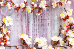 Blossoming branch Royalty Free Stock Photography
