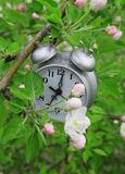 Blossoming branch of an apple-tree and alarm clock Stock Images