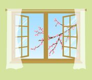Blossoming branch of a cherry outside the window. A tree branch with pink flowers and buds in the picture. Open window with curtains on a green background vector illustration