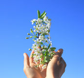 The blossoming branch. Royalty Free Stock Photo