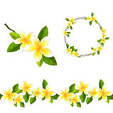 Blossoming branch of frangipani tree. Endless pattern brush, round garland Stock Photos