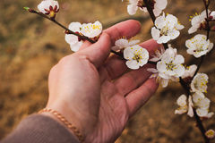 Blossoming branch in her hand Stock Photo