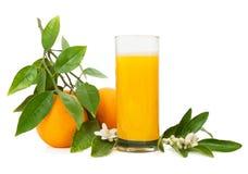 Orange  juice and fruits Stock Images