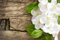 Blossoming branch Royalty Free Stock Photo