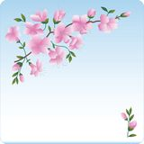 Blossoming branch. Pink flowers. Spring vector illustration
