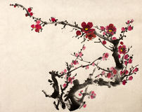 Blossoming branch of plum Royalty Free Stock Photography