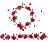 Blossoming branch of red roses. Royalty Free Stock Image