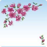 Blossoming branch. Scarlet flowers. Spring vector illustration