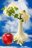 Blossoming branch in a vase Royalty Free Stock Image