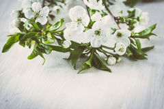 Blossoming branch on a wooden background Royalty Free Stock Image
