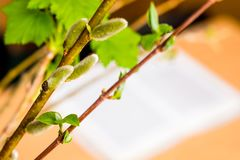 Blossoming branches in classroom, creating a spring mood, free royalty free stock photo