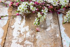 The blossoming branches Stock Images