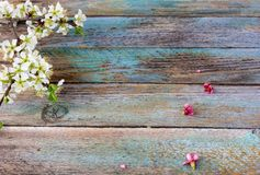 The blossoming branches Stock Photography