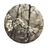 Blossoming branches over white background stock image