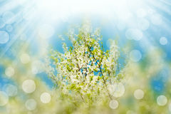 Blossoming branches tree with sun light Stock Photos