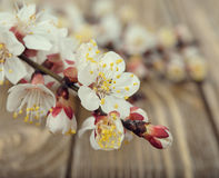 Blossoming branches Royalty Free Stock Photo