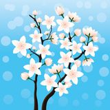 Blossoming cherry branch. Blossoming cherry branch on a blue background Stock Photo
