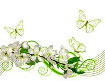 Blossoming cherry branch with white flowers Stock Photos
