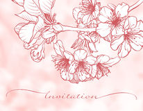 Blossoming cherry graphic branch. Blooming cherry graphic branch on abstract pink blurred background. Sakura, apple tree flowers vector illustration. Invitation Royalty Free Stock Image