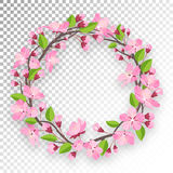 Blossoming cherry round frame for text. Apple-tree or cherry flowers and buds of branch are twisted by ring banner Royalty Free Stock Image