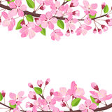 Blossoming cherry spring background. Apple tree of branch flowers and buds frame for text. Stock Image