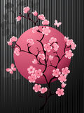 Blossoming Cherry Tree. For you design Stock Photography