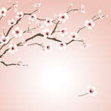 Blossoming cherry tree. Illustration Royalty Free Stock Image