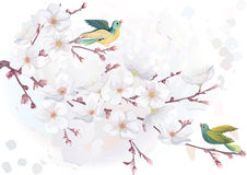 Blossoming cherry tree Royalty Free Stock Images