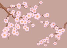 Blossoming cherry-tree Royalty Free Stock Photo