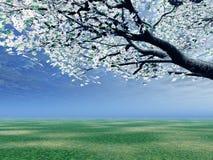 Blossoming cherry-tree Stock Photo