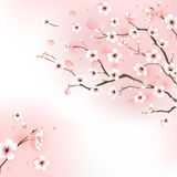 Blossoming cherry tree. Background  -  illustration Stock Photos
