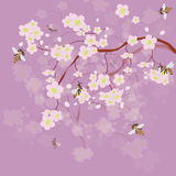 Blossoming of cherry-tree and bees Stock Image