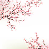 Blossoming Cherry Tree. EPS 10 Stock Photography