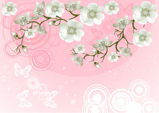 Blossoming Cherry Tree Royalty Free Stock Photo