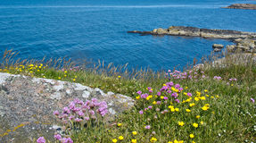 Blossoming coast Stock Photos