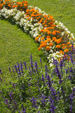 Blossoming colorful flowerbeds in summer Stock Image
