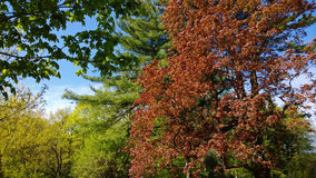 Blossoming colorful young leaves on various trees in the Park. Bright and colorful Royalty Free Stock Photography