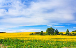 Blossoming field and blue sky Stock Photography