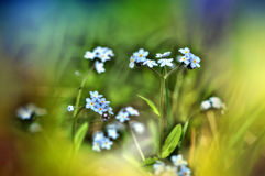 Blossoming field herbs with small flowers Stock Photography