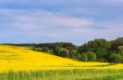Blossoming field and skyscape Stock Photography