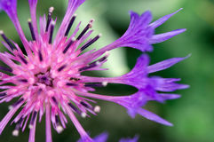 Blossoming flower Stock Images