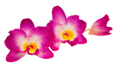 Blossoming flower exotic orchid Royalty Free Stock Photos