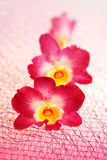 Blossoming flower exotic orchid Royalty Free Stock Images